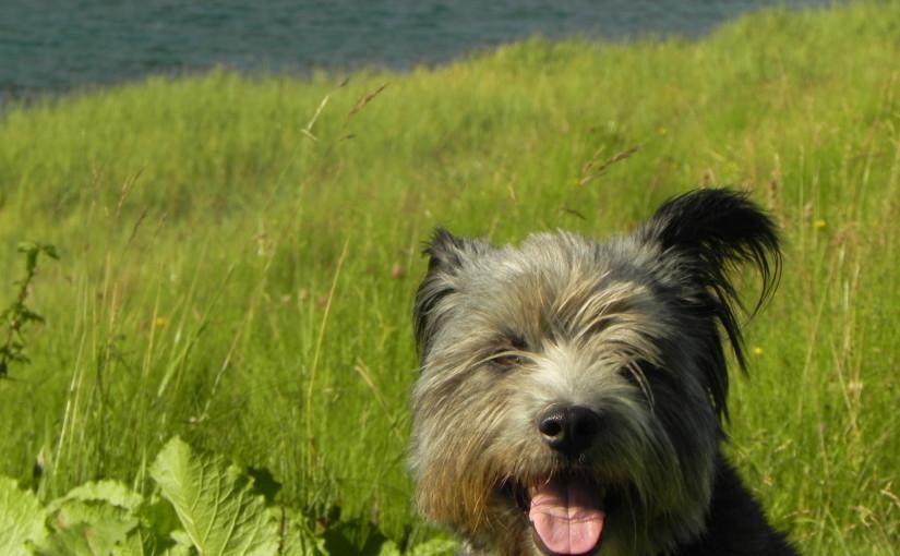 イタリア生活事情~犬のオペ・お代はいくら?~