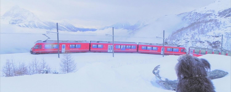 Bernina sotto neve e Ila